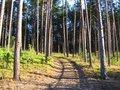 Coniferous forest Stock Photos