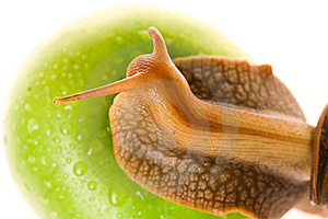 Snail On Green Apple Royalty Free Stock Photography - Image: 10003867