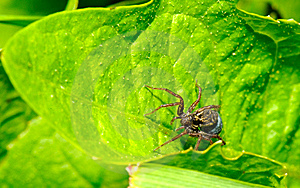 The Spider Stock Photos - Image: 10008883