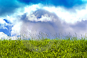 Sunny Sky And Poisonous Grass Royalty Free Stock Image - Image: 10020306