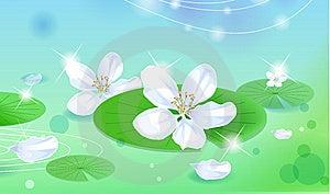 Lotus Stock Photography - Image: 10022972