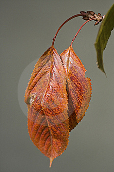 Brown Leaf Stock Photography - Image: 10023362