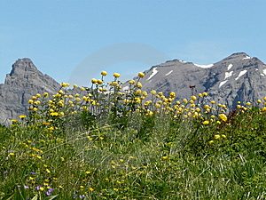 Mountain Flowers In A Mountain Landscape Switzerla Stock Images - Image: 10033174