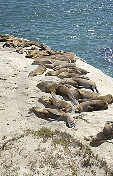 Seals Resting Royalty Free Stock Photography - Image: 10036207