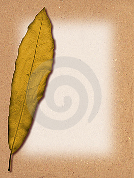 Leaf Texture Royalty Free Stock Image - Image: 10050286