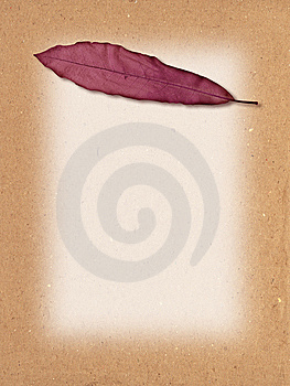 Leaf Texture Royalty Free Stock Image - Image: 10050336