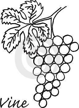 Vine Royalty Free Stock Photo - Image: 10050425