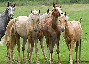 Pferde Stockbild - Bild: 10053091