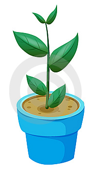 Flowerpots Royalty Free Stock Photography - Image: 10055587
