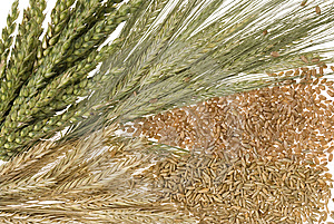 Wheat Selection Stock Photos - Image: 10062723