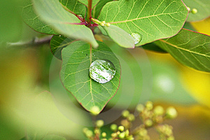 Dew Drops On A Leaves Stock Photos - Image: 10063413