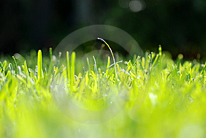 Grass Eye Level Royalty Free Stock Photos