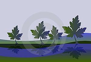 Leaves Reflection Background Royalty Free Stock Photo - Image: 10073625