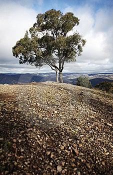 Single Tree, Blue Mountains, Austalia Stock Photos - Image: 10094613