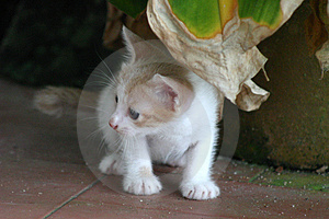 Cats-01 Stock Photos - Image: 1010923