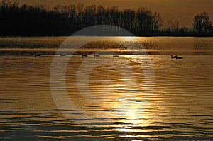 Ducks On A Lake During Sunset Royalty Free Stock Images - Image: 1015859