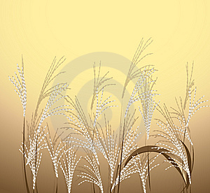 Reed Stock Images - Image: 10104024