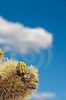 Jumping Colla Cactus Detail Royalty Free Stock Photo - Image: 10104095