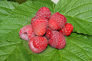 Raspberry Stock Images - Image: 10112214
