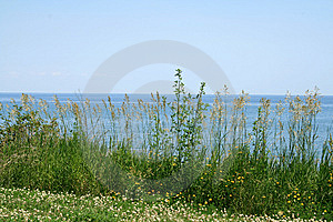 Landscape With Flowers Royalty Free Stock Photos - Image: 10114428