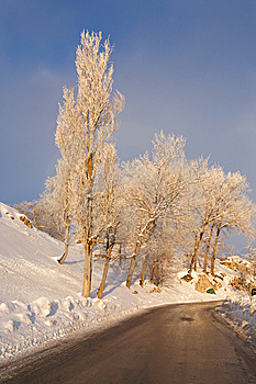 Winter Road. Royalty Free Stock Photography - Image: 10117167