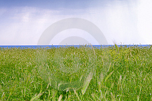Ears And Sea With Showers Stock Images - Image: 10117684