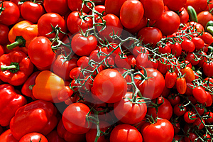Great Tomatos Royalty Free Stock Photos - Image: 10117878
