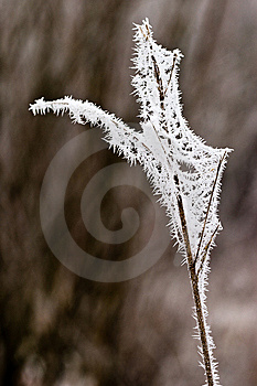 Hoar Frost Or Soft Rime On Plants At A Winter Day Stock Photography - Image: 10121912