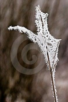 Hoarfrost Oder Weicher Raureif Auf Anlagen An Einem Wintertag Stockfotografie - Bild: 10121912