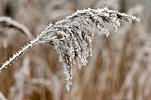 Hoar Frost Or Soft Rime On Plants At A Winter Day Stock Photography - Image: 10122062