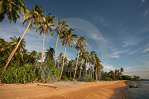 Palms, Sand And Ocean Royalty Free Stock Images - Image: 10122409