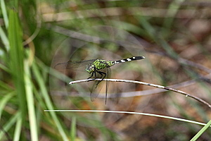 Dragonfly Royalty Free Stock Photography - Image: 10125567