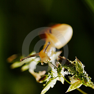 Little Snail. Royalty Free Stock Photos - Image: 10130568