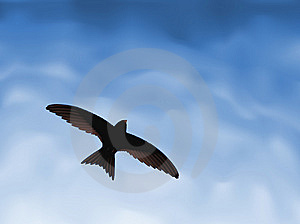 Little Swallow Stock Images - Image: 10150264