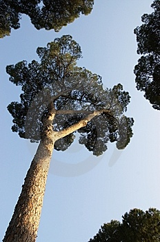Trees Over Clear Sky Stock Photography - Image: 10152082