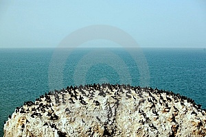 Birds On The Rock Stock Photography - Image: 10162292