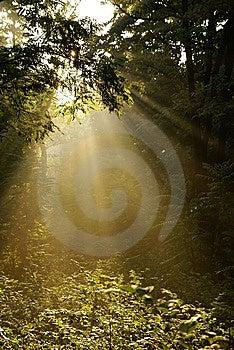 Misty Sunrise Royalty Free Stock Photography - Image: 10172347