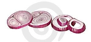 Onion Slices Royalty Free Stock Photo - Image: 10176445