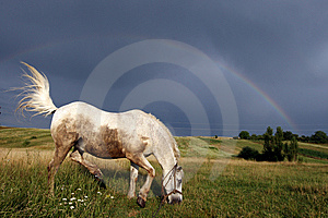 Horse Under A Rainbow Royalty Free Stock Image - Image: 10178356