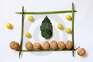 Compozition From Leaves And Fruits Royalty Free Stock Photography - Image: 10180027