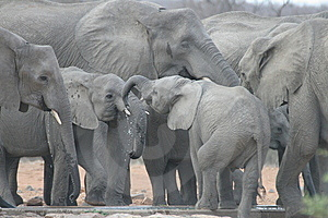 Elephant Family Royalty Free Stock Photo - Image: 10183015
