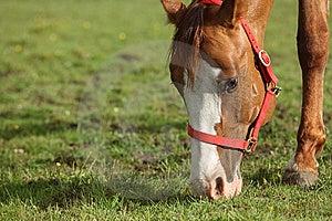 Grazing Horses Stock Image - Image: 10184801