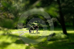 Wildlife Landscape Royalty Free Stock Photos - Image: 10194818