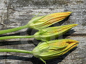 Courgettes Or Zucchinis Flowers Royalty Free Stock Photos - Image: 10195868