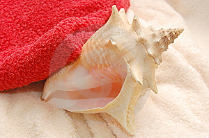 Big Very Beautiful Seashells On Towel Background Royalty Free Stock Photo - Image: 10196125