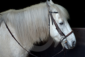 Ready To Ride Royalty Free Stock Photography - Image: 1021877