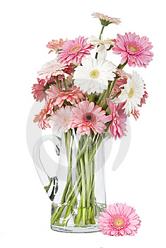 Pink Gerber Daisies In Vase Isolated On White Back Royalty Free Stock Photography - Image: 10208567