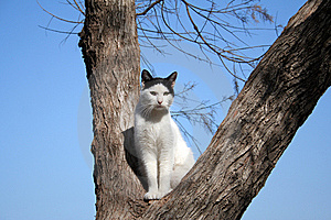 Cat On A Tree Stock Image - Image: 10214221