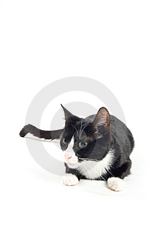 Young Cat Is Staring In The Distence Stock Photo - Image: 10217400