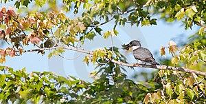 Bird Stock Photos - Image: 10219953